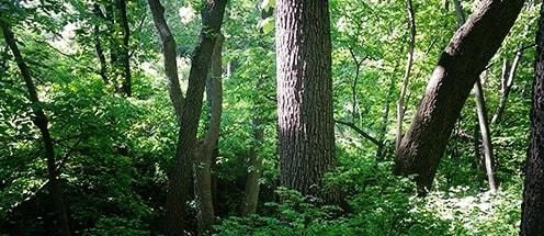 Broadleaf Lumber Quality